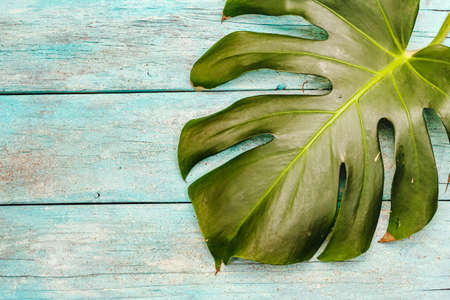 Monstera leaf on a trendy turquoise wooden background. The concept of vacation, spa rest, relaxation, copy space, top view