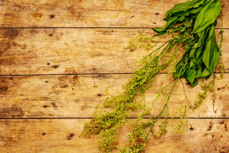 Fresh young sorrel, its leaves and inflorescences. Traditional ingredient for cooking. Old wooden background