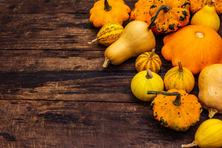 Harvest of various ripe pumpkins. Colorful festive background, Thanksgiving or Halloween Day. Old wooden boards background, copy space