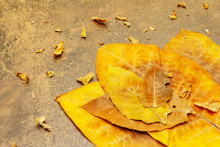 Rough dry tobacco leaves. High quality big leaf ready to be made cigarettes. Stone concrete background, copy space