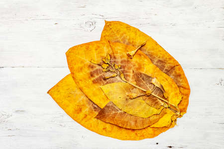 Rough dry tobacco leaves and flowers. High quality big leaf ready to be made cigarettes. White wooden boards background, top view 版權商用圖片