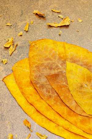 Rough dry tobacco leaves. High quality big leaf ready to be made cigarettes. Stone concrete background, top view