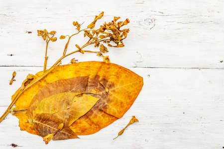 Rough dry tobacco leaves and flowers. High quality big leaf ready to be made cigarettes. White wooden boards background, top view