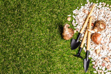 Spring planting and gardening concept. Scattered decorative pebbles, garden tools, and flower bulbs on green grass, flat lay, a place for text, top view