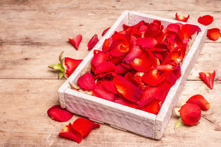 Fresh red roses petals in wooden crates. Fragrant flowers, trendy hard light, dark shadow. Natural spa concept or preparation rose water. Old wooden table, place for text