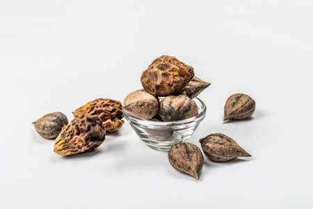 Ripe Juglans cordiformis Maxim or heart-shaped walnut isolated on white background. Young green and unpeeled whole nuts, flat lay, mockup, template