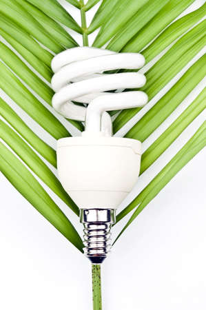Bulb with green leaf on white photo