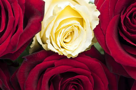 Rose bouquet extreme close up Stock Photo - 9343933