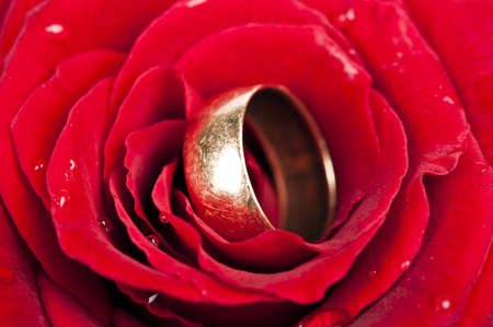 Wet rose and wedding ring photo