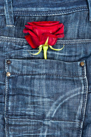 Rose in blue jeans pocket Stock Photo - 9344762