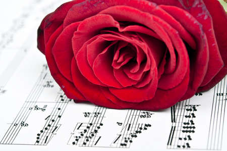 musical score: Red rose and musical score Stock Photo