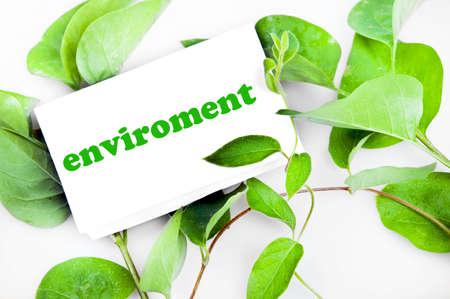 enviroment: Enviroment message on green leaves Stock Photo