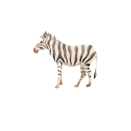 Watercolor hand drawn sketch illustrations of African animals zebra isolated on white Фото со стока
