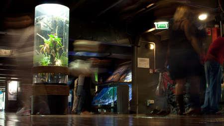 genoa: Genoa acquarium