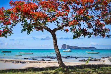 Cap Malheureux,view with turquoise sea and traditional flamboyant red tree,Mauritius island. High quality photo