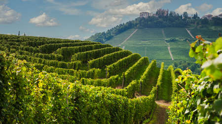 Panorama of Novello with the town and the vineyards. Novello is the main villages of the Langhe wine district, Piedmont, Italy Stok Fotoğraf