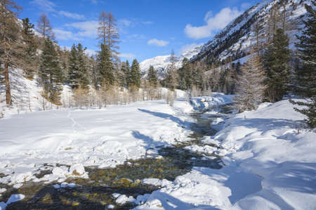 Snowy landscape with Roseg river and a larch forest, Roseg valley, Pontresina, canton of Grisons, Engadin, Switzerland