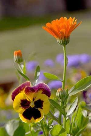 Flowers 2 Stock Photo - 513711