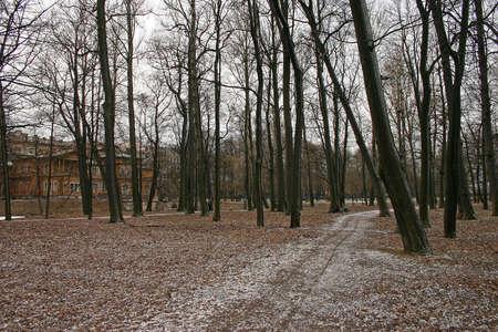 Autumn 5 November