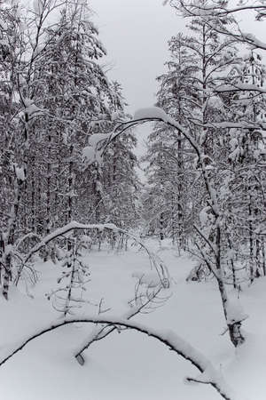 icily: Winter forest 2