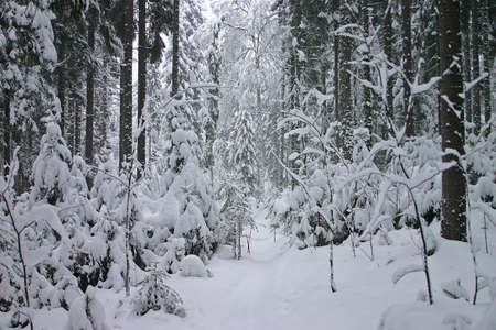icily: Snow forest 5