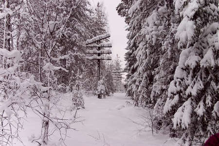 expedient: Winter forest 7 Stock Photo