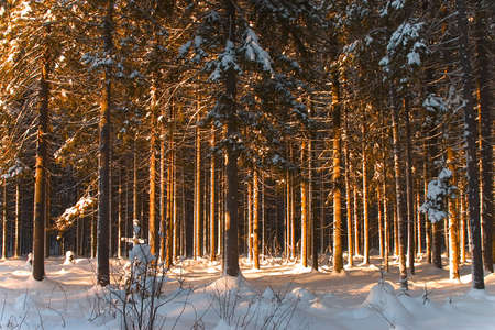icily: Winter forest 10