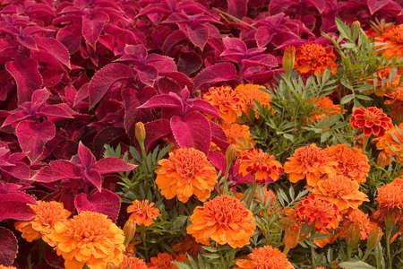 Diagonal flowers Stock Photo - 524452