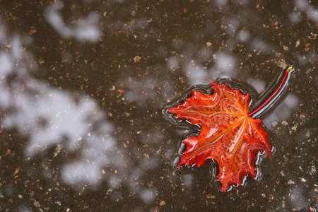 The fallen autumn leaf in water