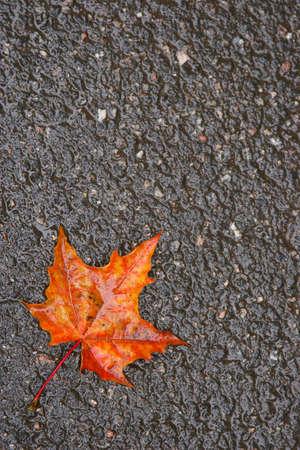 The fallen autumn leaf on wet asphalt photo