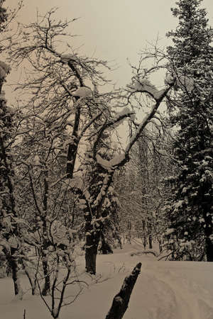 Path in a winter snow wood