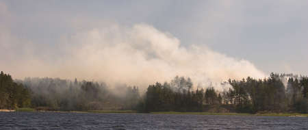 Forest fire on coast of northern lake, a panorama