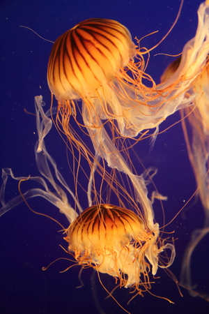 floating jellyfish in the water Stock Photo