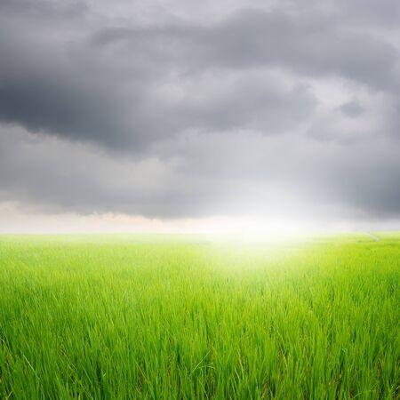 rainclouds: Green rice field and rainclouds