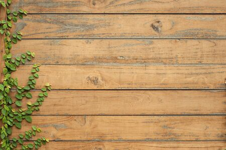 Leaves on wood for text and background Foto de archivo