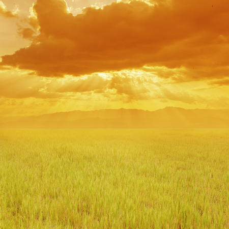 Green Grass field and sunset mountain for background