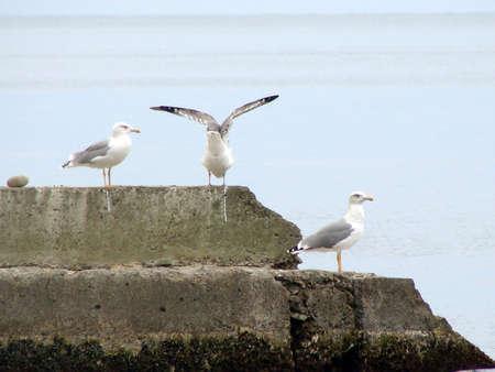 white bird: Image of gulls white bird animals photography Stock Photo