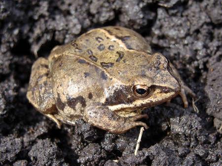 amphibians: Image of frog amphibians small pets nature
