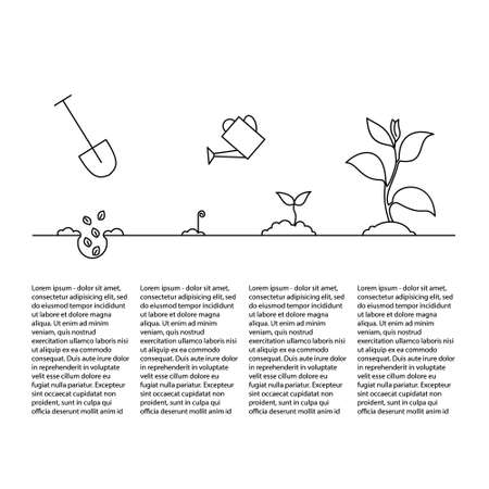 cultivation: Timeline infographic of planting tree process, business concept outline design