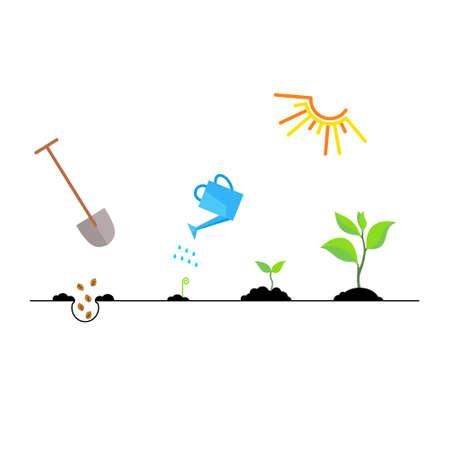 Brote de línea y el cultivo de plantas. hoja de carácter lineal, crecer árbol, jardín y flores, jardinería orgánica, la flora eco. infografía línea de tiempo de proceso de plantación de árboles, concepto de negocio diseño plano.