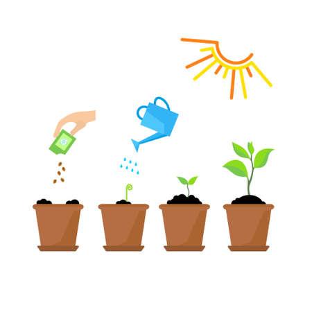 Line spruit en plant groeit. Lineaire karakter blad, groeien boom, tuin en bloemen, biologisch tuinieren, eco flora. Timeline infographic van die boom planten proces, business concept plat design. Stockfoto