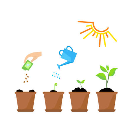 seedling growing: Line sprout and plant growing. Linear nature leaf, grow tree, garden and flower, organic gardening, eco flora. Timeline infographic of planting tree process, business concept flat design.