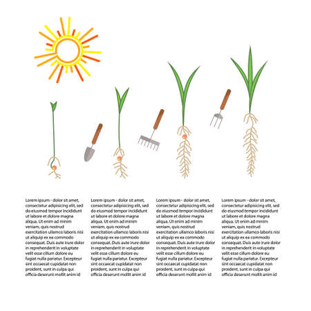 tree planting: Line sprout and plant growing. Linear nature leaf, grow tree, garden and flower, organic gardening, eco flora. Timeline infographic of planting tree process, business concept flat design.