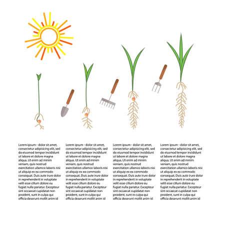 Line spruit en plant groeit. Lineaire karakter blad, groeien boom, tuin en bloemen, biologisch tuinieren, eco flora. Timeline infographic van die boom planten proces, business concept plat design. Stock Illustratie