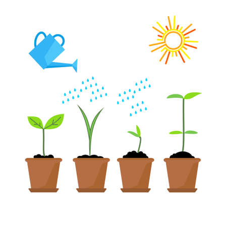 Line sprout and plant growing. Linear nature leaf, grow tree, garden and flower, organic gardening, eco flora. Timeline infographic of planting tree process, business concept flat design. 向量圖像