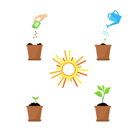 planting tree: Line sprout and plant growing. Linear nature leaf, grow tree, garden and flower, organic gardening, eco flora. Timeline infographic of planting tree process, business concept flat design.