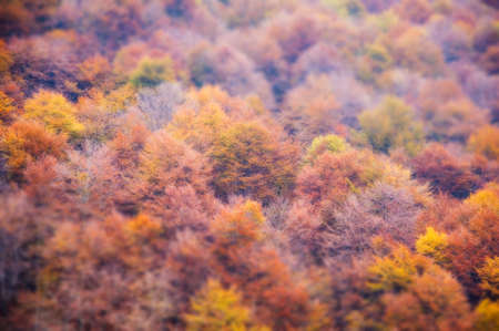 colorful autumn forest Trees Stock Photo