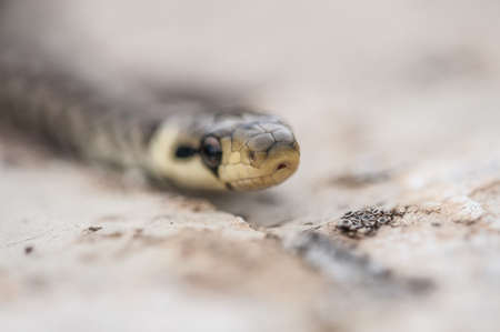 cold blooded: Green whip snake