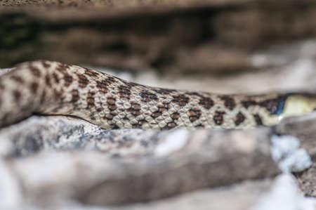 Green whip snake skin