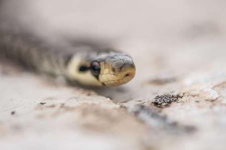 Green whip snake head macro photography Stock Photo